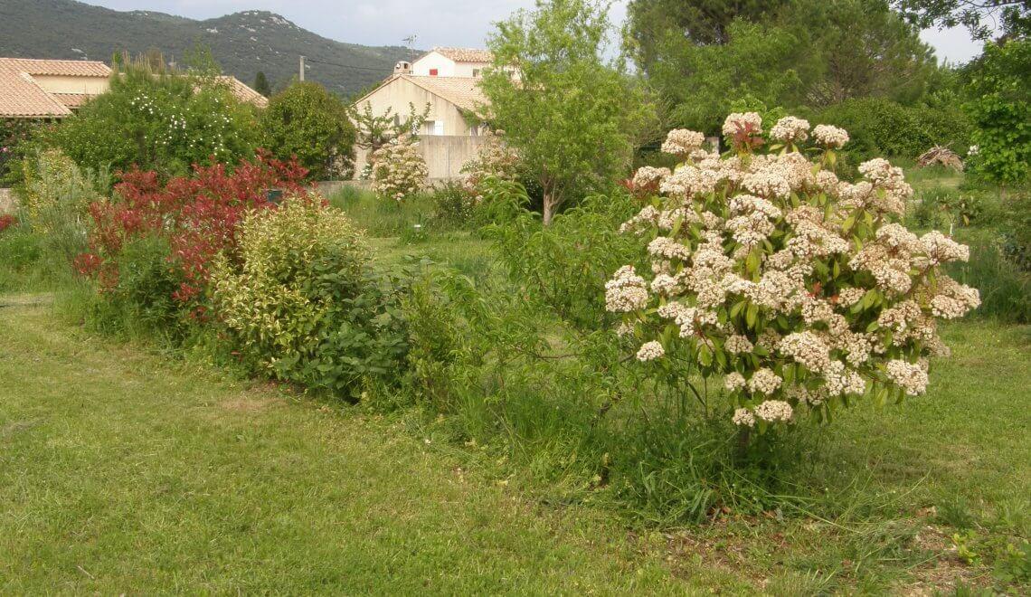 Plantes grimpantes sur cl ture humeur de jardinier for Conseil de jardinier