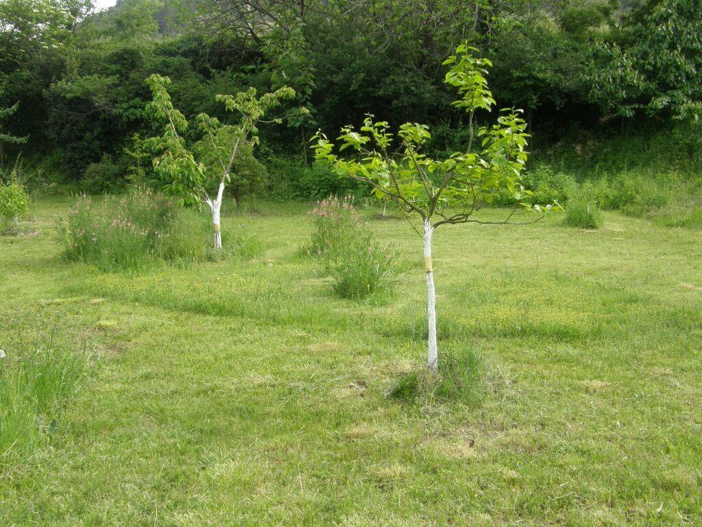 tronc badigeonné de blanc arboricole