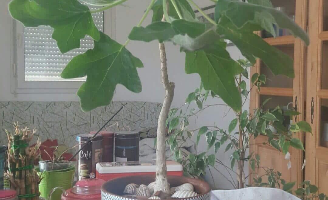 Engrais pour plantes d'intérieur
