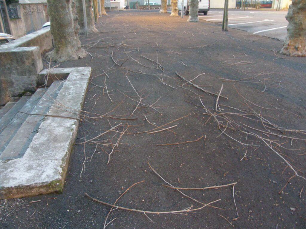 branches de platane au sol