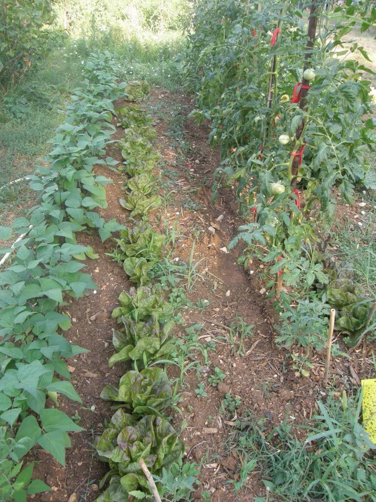 Haricots au cong lo si surproduction humeur de jardinier - Congeler les haricots verts du jardin ...