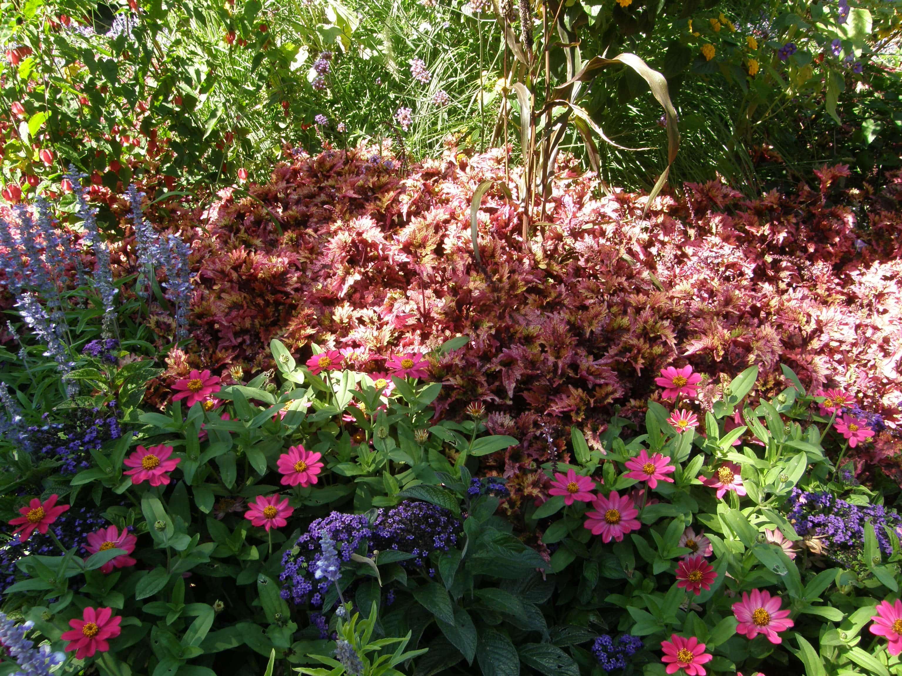 Plantes de soleil, plantes de mi-ombre, plantes d'ombre - Humeur de Jardinier