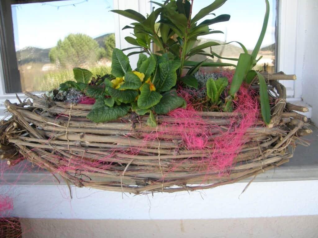 décoration et protection avec des lianes de clématite sauvage