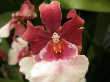 Petite fée dans orchidée