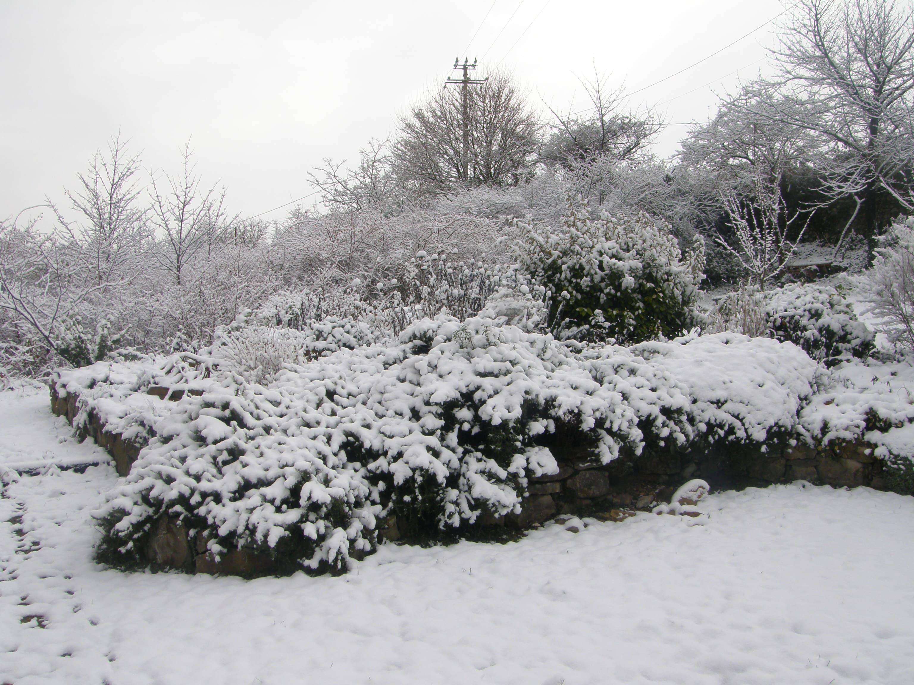 Neige dans le Gard, à St Hippolyte, dans mon jardin