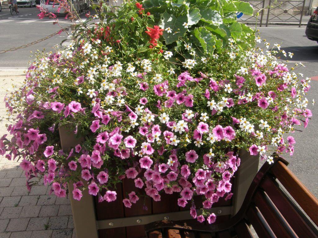composition florale, ville de La Rochelle