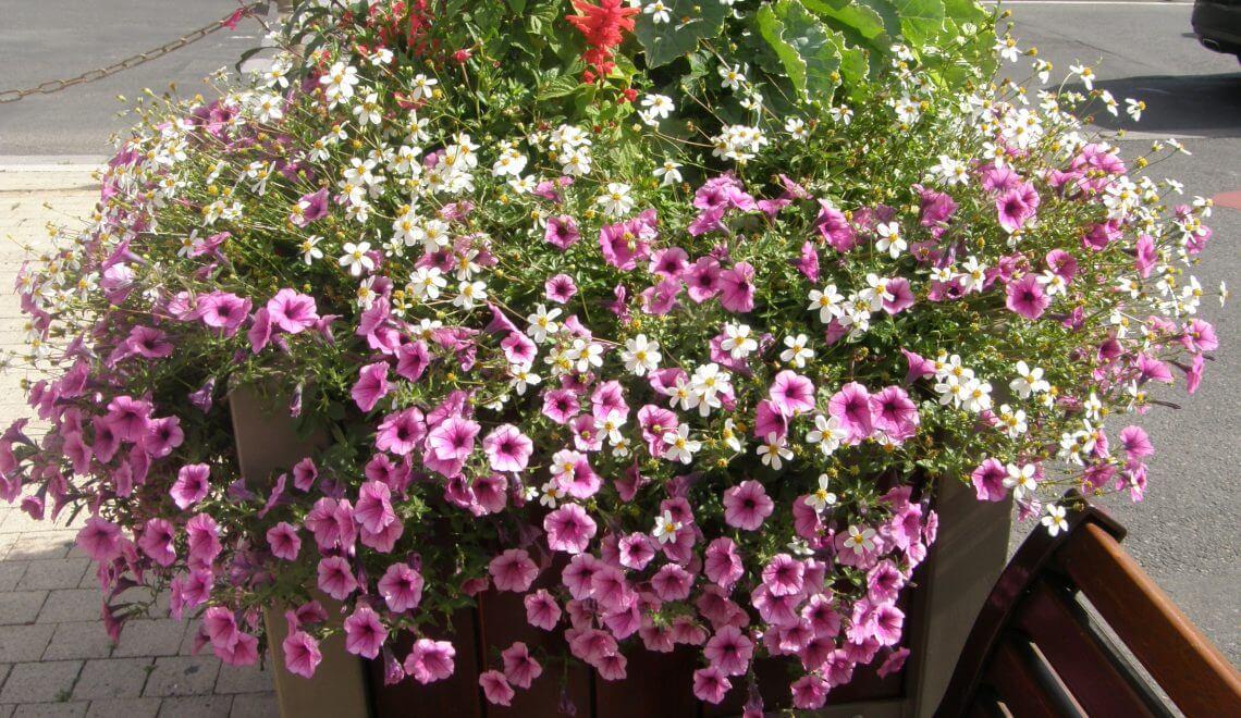 Les potées fleuries