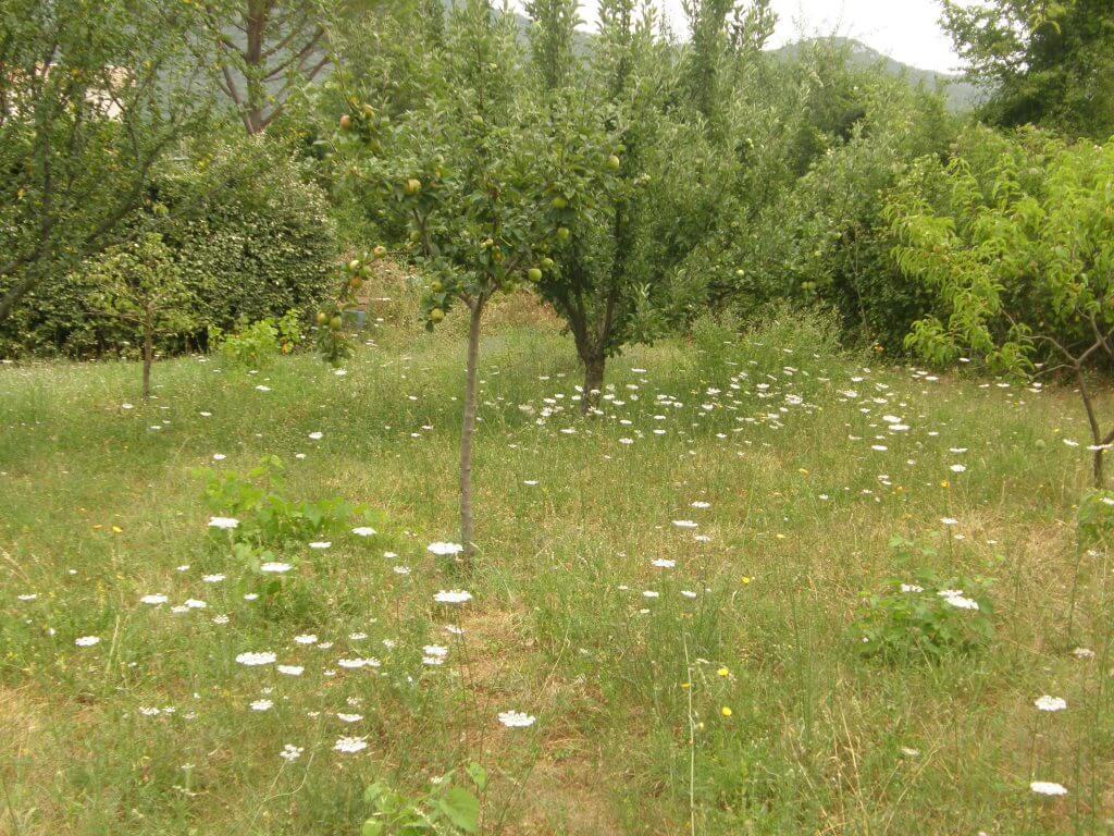 jachère fleurie, gestion différenciée