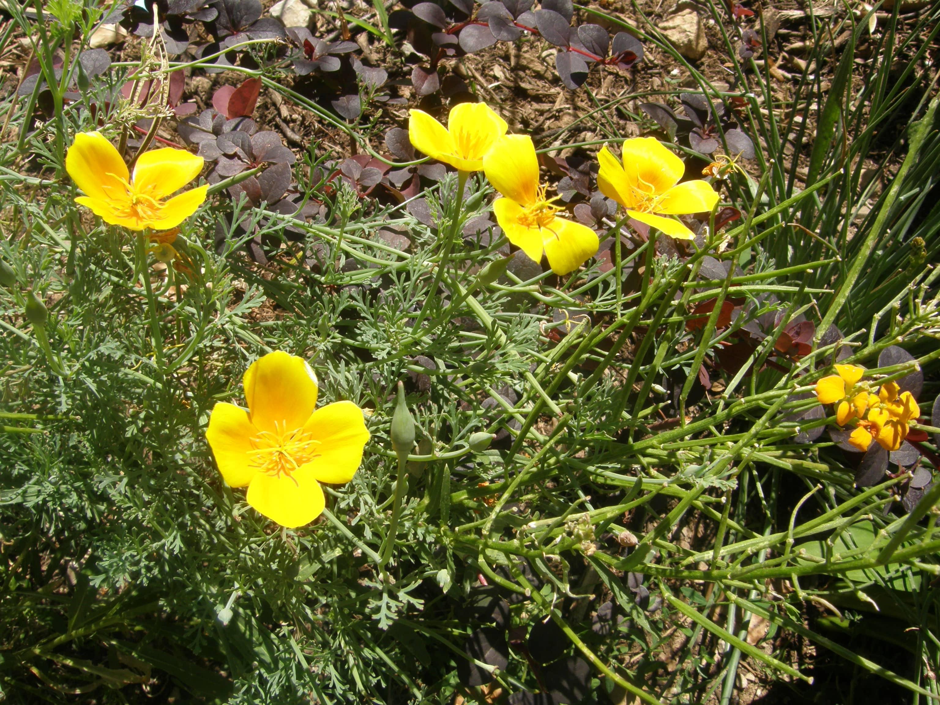 Bisannuelles ou vivaces humeur de jardinier for Plante annuelle