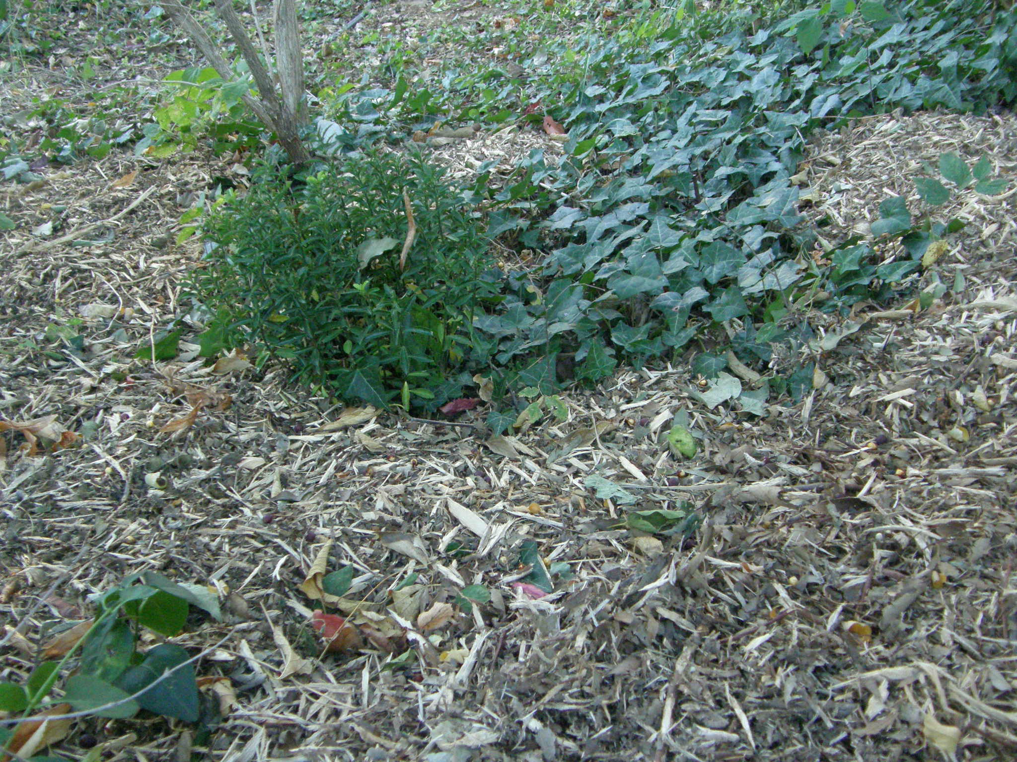 Comment se passer de produits phyto au jardin ? (2)