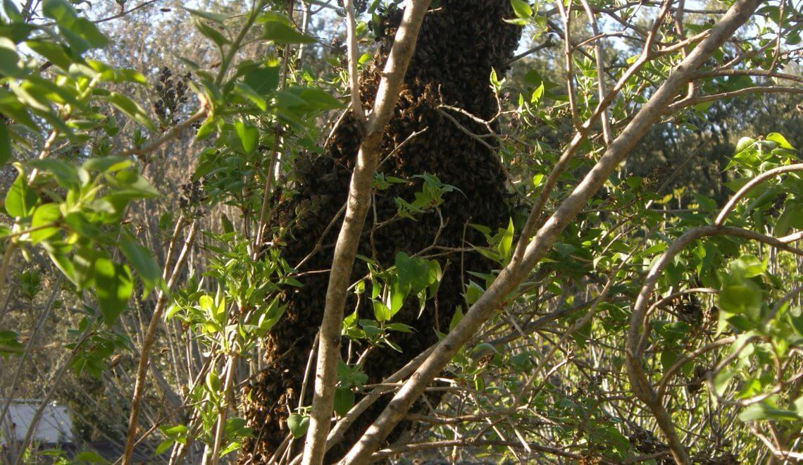 les abeilles bzz bzz bzz