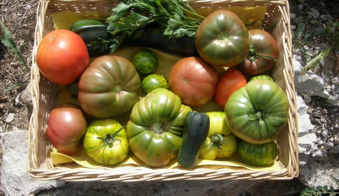 acariens sur tomates