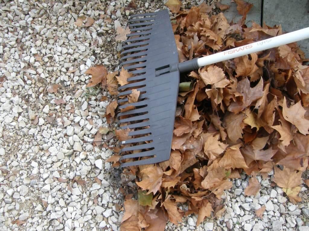 """Ratissage des feuilles, considéré comme """"petit jardinage"""" pour le statut autoentrepreneur"""