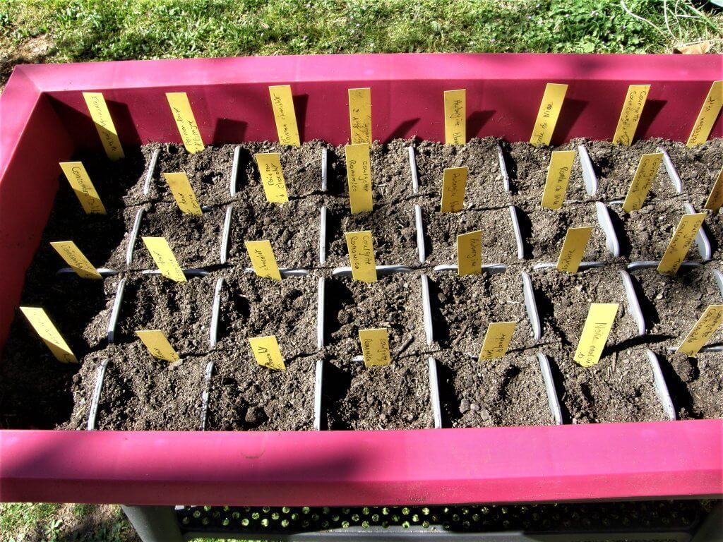 Le semis est fait avec une étiquette dans chaque alvéole