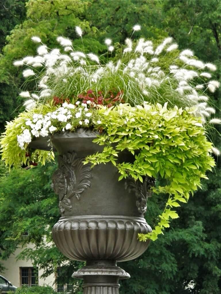 Plantation dans vase Médicis
